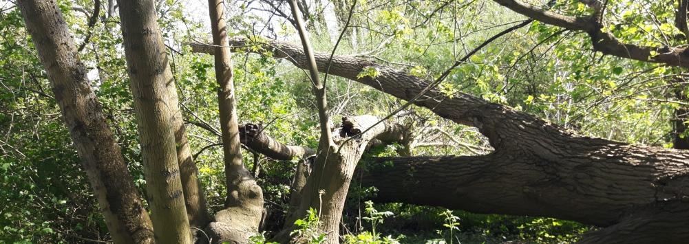 Heuckenlock – Urwald in der Großstadt