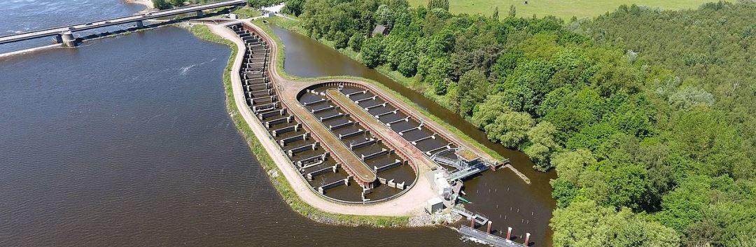 25.000 Fische steigen täglich 45 Stufen elbaufwärts